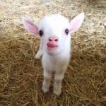 Cute Animals soEbola.com